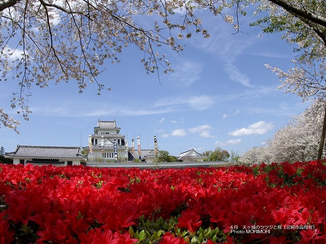 天ヶ城公園のツツジと桜の壁紙 p_miyazaki_04_009.jpg