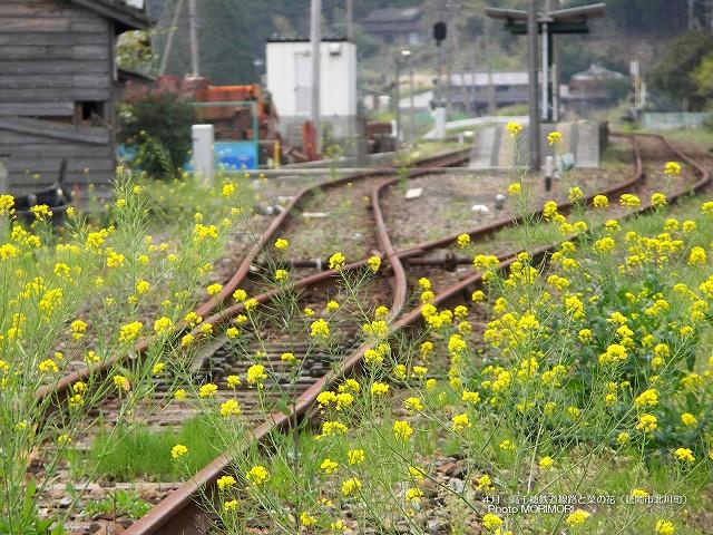 菜の花の壁紙 p_miyazaki_04_010.jpg