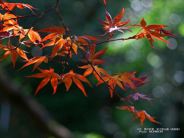 紅葉の壁紙 p_miyazaki_04_013.jpg
