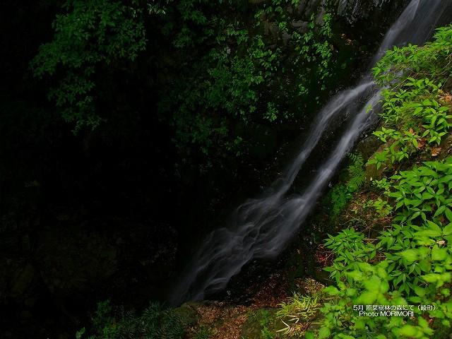 宮崎県綾町 綾の森の壁紙 p_miyazaki_05_013.jpg