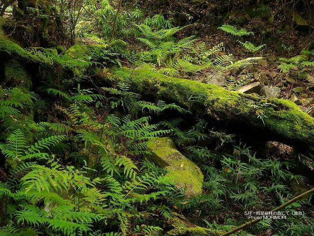 綾の森の壁紙2 p_miyazaki_05_014.jpg