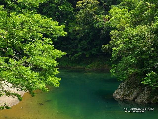 綾 照葉樹林と綾南川 壁紙 p_miyazaki_05_015.jpg