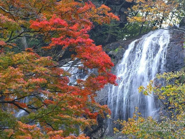 五ヶ瀬町 白滝の紅葉の壁紙 p_miyazaki_11_002.jpg