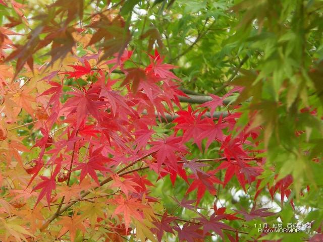 紅葉 西都原公園にて p_miyazaki_11_010.jpg
