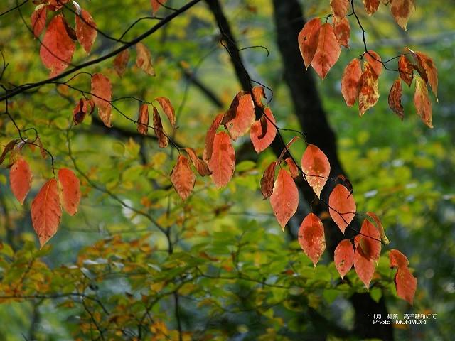 紅葉の写真 p_miyazaki_11_012.jpg