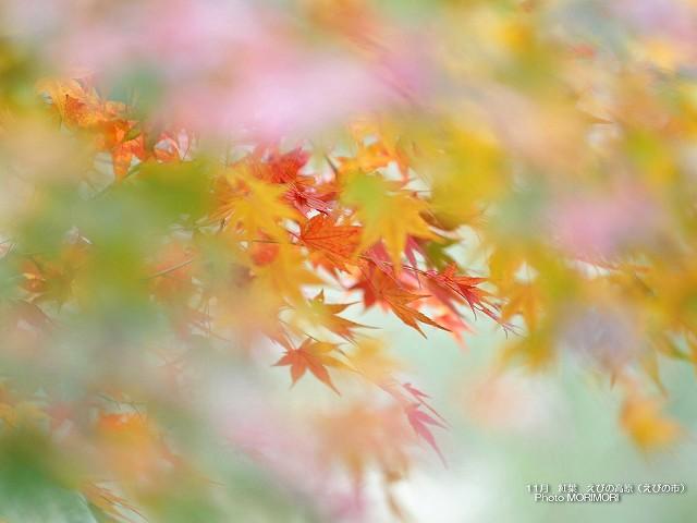紅葉の壁紙 p_miyazaki_11_013.jpg