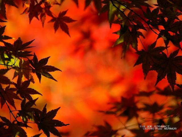 紅葉の壁紙 p_miyazaki_11_014.jpg