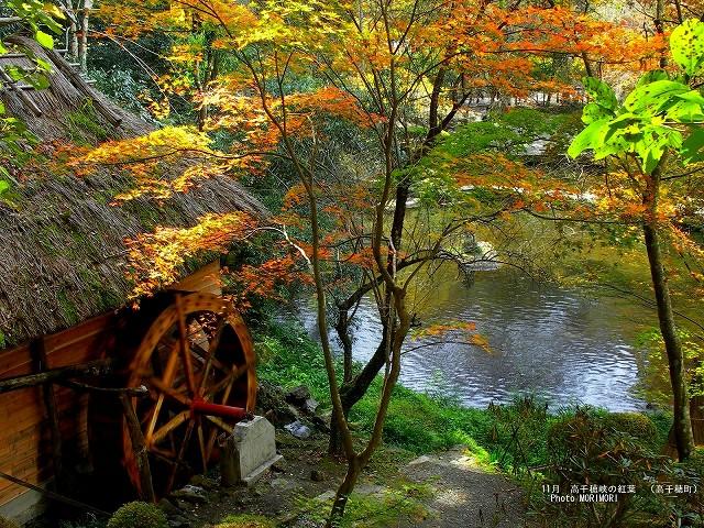 紅葉の壁紙 高千穂峡 p_miyazaki_11_016.jpg