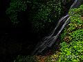 宮崎県写真壁紙(照葉樹林 綾の森) p_miyazaki_05_013_s.jpg
