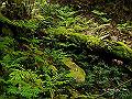宮崎県写真壁紙(照葉樹林 綾の森) p_miyazaki_05_014_s.jpg