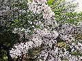 宮崎県写真壁紙(ノカイドウ えびの高原) p_miyazaki_05_021_s.jpg