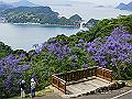 宮崎県写真壁紙(ジャカランダ 道の駅なんごう) p_miyazaki_06_002_s.jpg