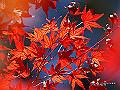 宮崎県写真壁紙(紅葉 ひなもり台) p_miyazaki_11_006_s.jpg
