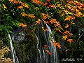 宮崎県写真壁紙(紅葉 高千穂峡) p_miyazaki_11_017_s.jpg